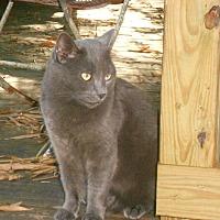Adopt A Pet :: Gigi - Naples, FL