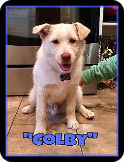 Terrier (Unknown Type, Medium)/Husky Mix Puppy for adoption in Duchess, Alberta - Colby
