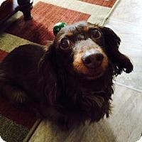 Adopt A Pet :: Penny - Beavercreek, OH