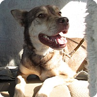 Adopt A Pet :: KODA - Jacksonville, FL