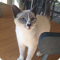 Adopt A Pet :: Leo - Fort Lauderdale, FL