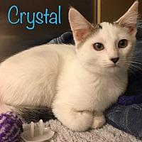 Adopt A Pet :: Crystal - El Dorado Hills, CA