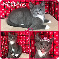 Adopt A Pet :: Mittens - Jeffersonville, IN