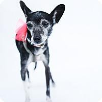 Adopt A Pet :: Beatrice - Los Angeles, CA