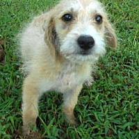 Adopt A Pet :: Finn - Allentown, NJ