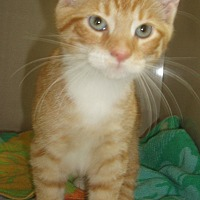 Adopt A Pet :: Twinkle Toes - Germansville, PA