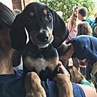 Adopt A Pet :: Big Sur Shannon