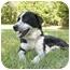 Photo 3 - Labrador Retriever/Pointer Mix Dog for adoption in Mocksville, North Carolina - Fredo