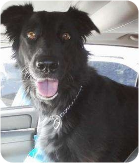 Border Collie Mix Dog for adoption in Gilbert, Arizona - Reah