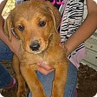 Adopt A Pet :: Mocha - Ranger, TX
