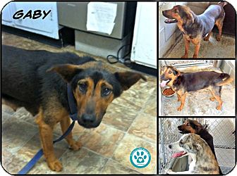 Shepherd (Unknown Type) Mix Dog for adoption in Kimberton, Pennsylvania - Gaby