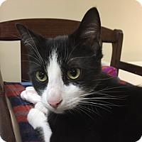 Adopt A Pet :: Pauley - Medina, OH
