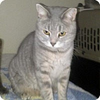 Adopt A Pet :: Missy - Harrisonburg, VA
