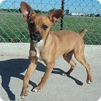 Adopt A Pet :: Nubbs - Seguin, TX