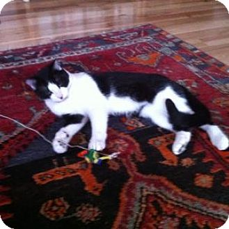 Domestic Shorthair Cat for adoption in Kenai, Alaska - Benny
