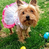 Adopt A Pet :: Eloise - Livonia, MI