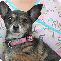 Chihuahua Mix Dog for adoption in Inland Empire, California - MADDIE