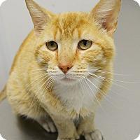 Adopt A Pet :: Tango - Springfield, IL