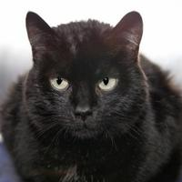 Adopt A Pet :: Jessie - Mentor, OH