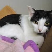 Adopt A Pet :: Purdy - Westville, IN