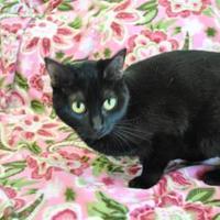 Adopt A Pet :: Hilary - Thomasville, GA