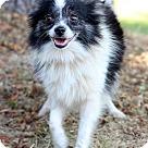 Adopt A Pet :: Nina