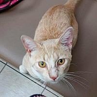 Adopt A Pet :: Drogo - Palo Cedro, CA
