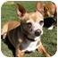 Photo 3 - Chihuahua Dog for adoption in Vista, California - Sugar Plum