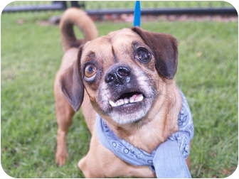 Chihuahua Mix Dog for adoption in El Cajon, California - Al