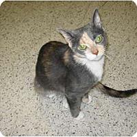 Adopt A Pet :: Savannah - Warminster, PA