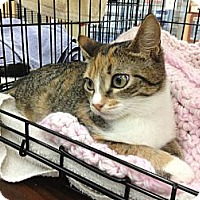 Adopt A Pet :: Jewel-lea - Vero Beach, FL
