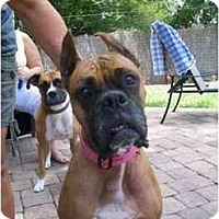 Adopt A Pet :: Jezebel - Gainesville, FL