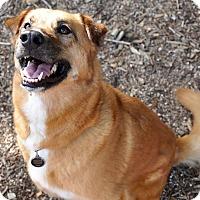 Adopt A Pet :: Abbi - Austin, TX