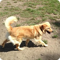 Adopt A Pet :: Ryder - Murrells Inlet, SC