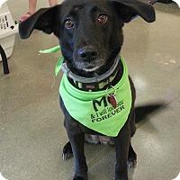 Adopt A Pet :: Sheba - Chesapeake, VA