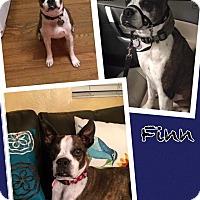Adopt A Pet :: Finn - Scottsdale, AZ
