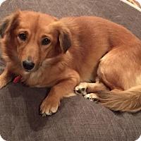 Adopt A Pet :: Addison - Decatur, GA