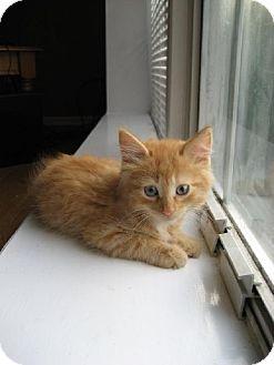 Domestic Longhair Cat for adoption in Walnutport, Pennsylvania - Twister