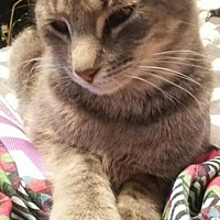 Adopt A Pet :: DUGGER - Lawton, OK