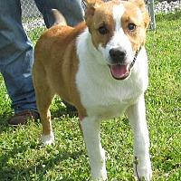 Adopt A Pet :: Andre - Reeds Spring, MO