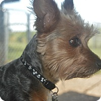 Adopt A Pet :: Samson - Prole, IA