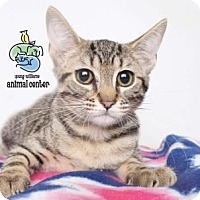 Adopt A Pet :: Joan of Arc - Knoxville, TN