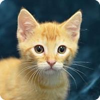 Adopt A Pet :: Colonel     171188 - Atlanta, GA