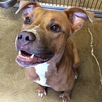 Adopt A Pet :: Lenny - Jackson, MI