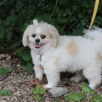 Adopt A Pet :: Winifred - Muskegon, MI