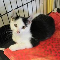 Adopt A Pet :: Alexander - Heath, OH