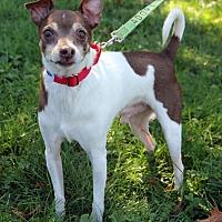 Adopt A Pet :: Syd - Harrison, NY