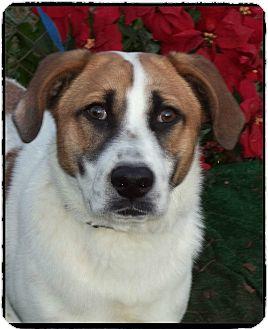 Labrador Retriever Mix Dog for adoption in Marietta, Georgia - FRANKIE