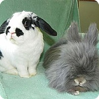 Adopt A Pet :: Macintosh & Bunny - North Gower, ON