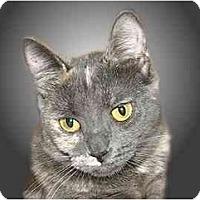 Adopt A Pet :: Avery - Montgomery, IL